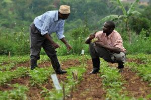 farmer-high-quality-seed
