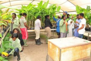 agric-youths-plant-production
