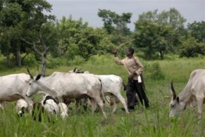 anti grazing bill herdsmen