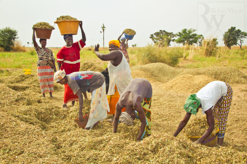 FG Targets Single Digit Interest Rate Loan for Farmers