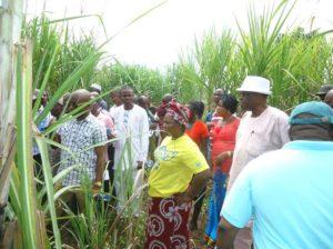 sugarcane-nsdc