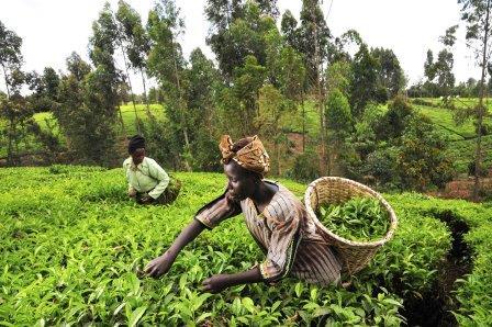 FG, FECA Train 500 Unemployed Graduates in Farming