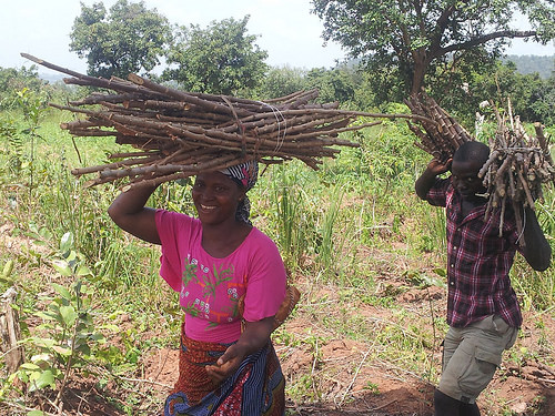 RMRDC Gives Improved Cassava Stems to Imo Farmers