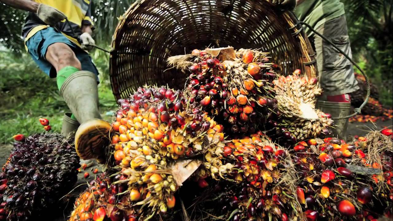 Untapped Potential of Oil Palm