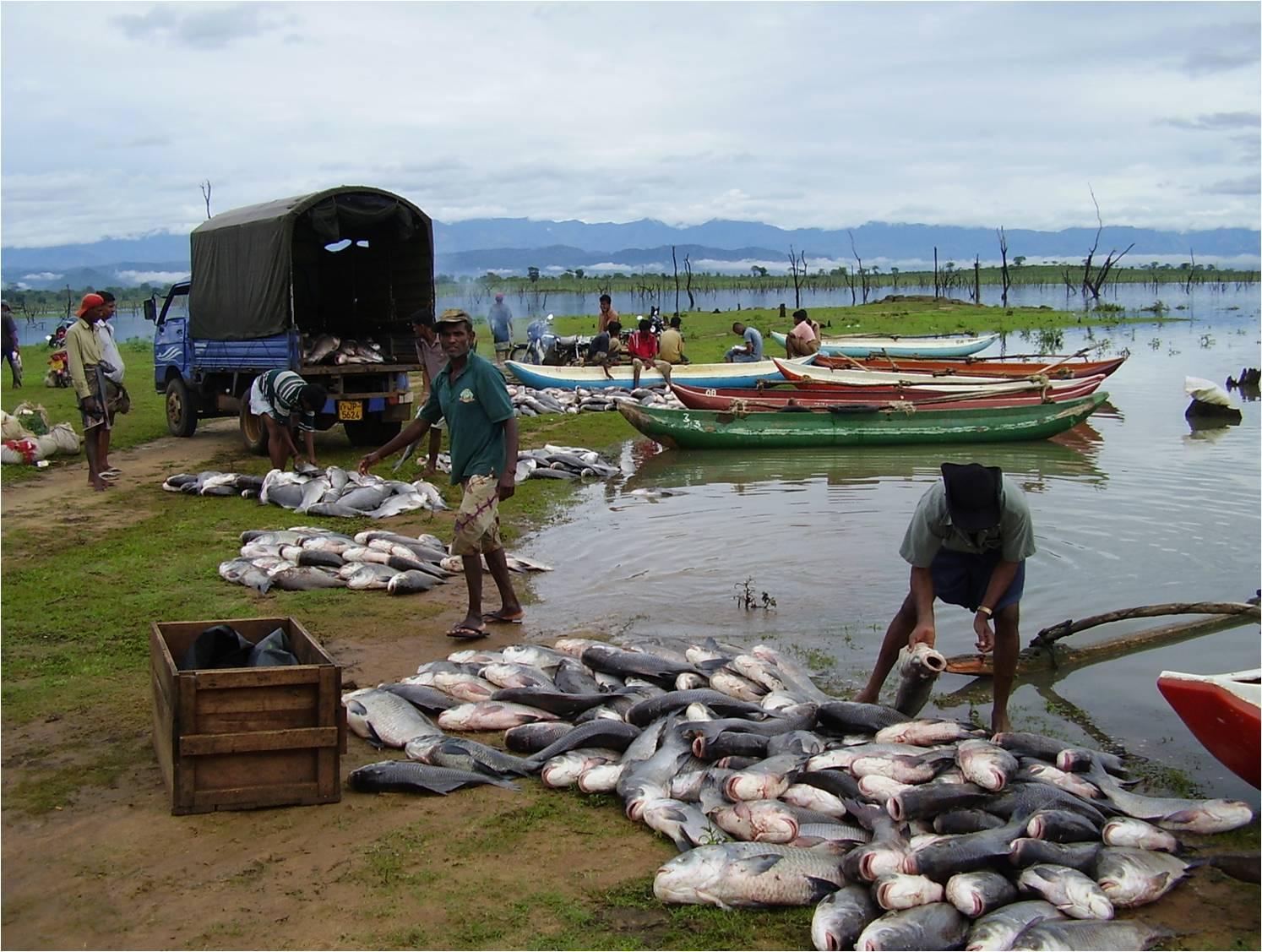 Domestic Fish Production Records 0.8% Rise