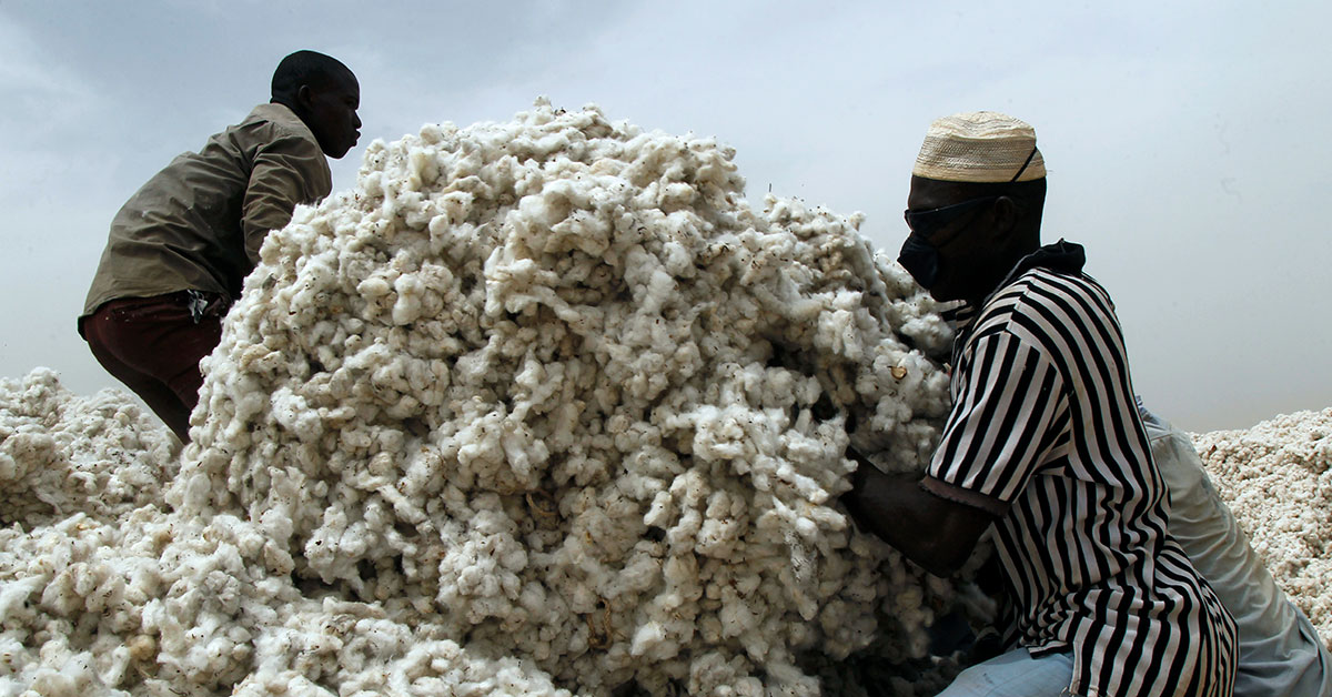 cotton sector nigeria