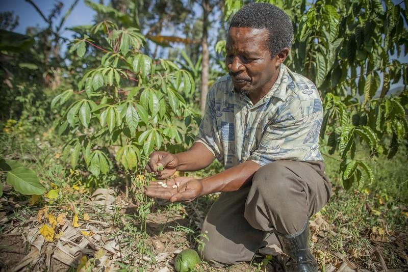 Wefarm Smallholder Agricultural Ecosystem