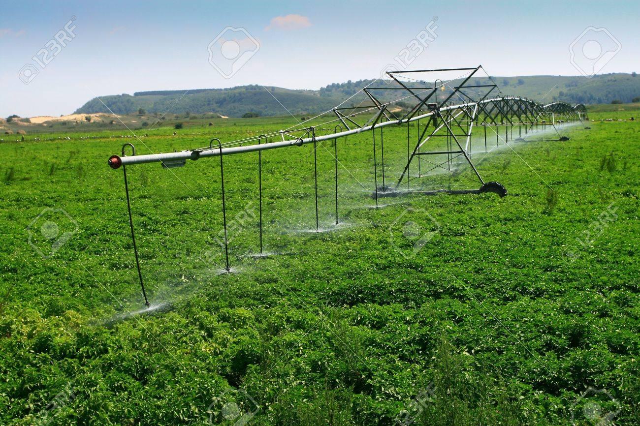 Irrigated Farmland