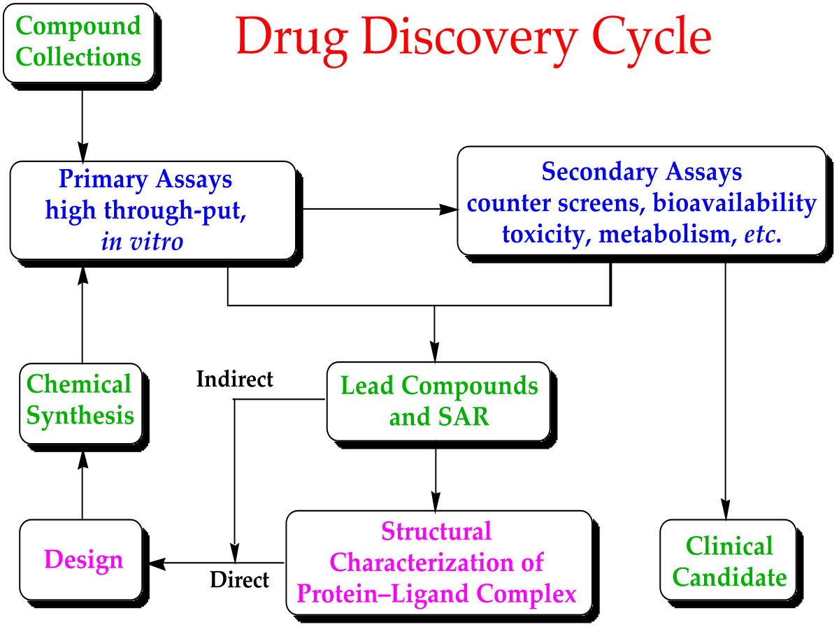 picture of drug discovery
