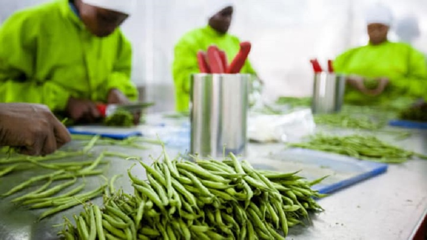 agro-processing companies