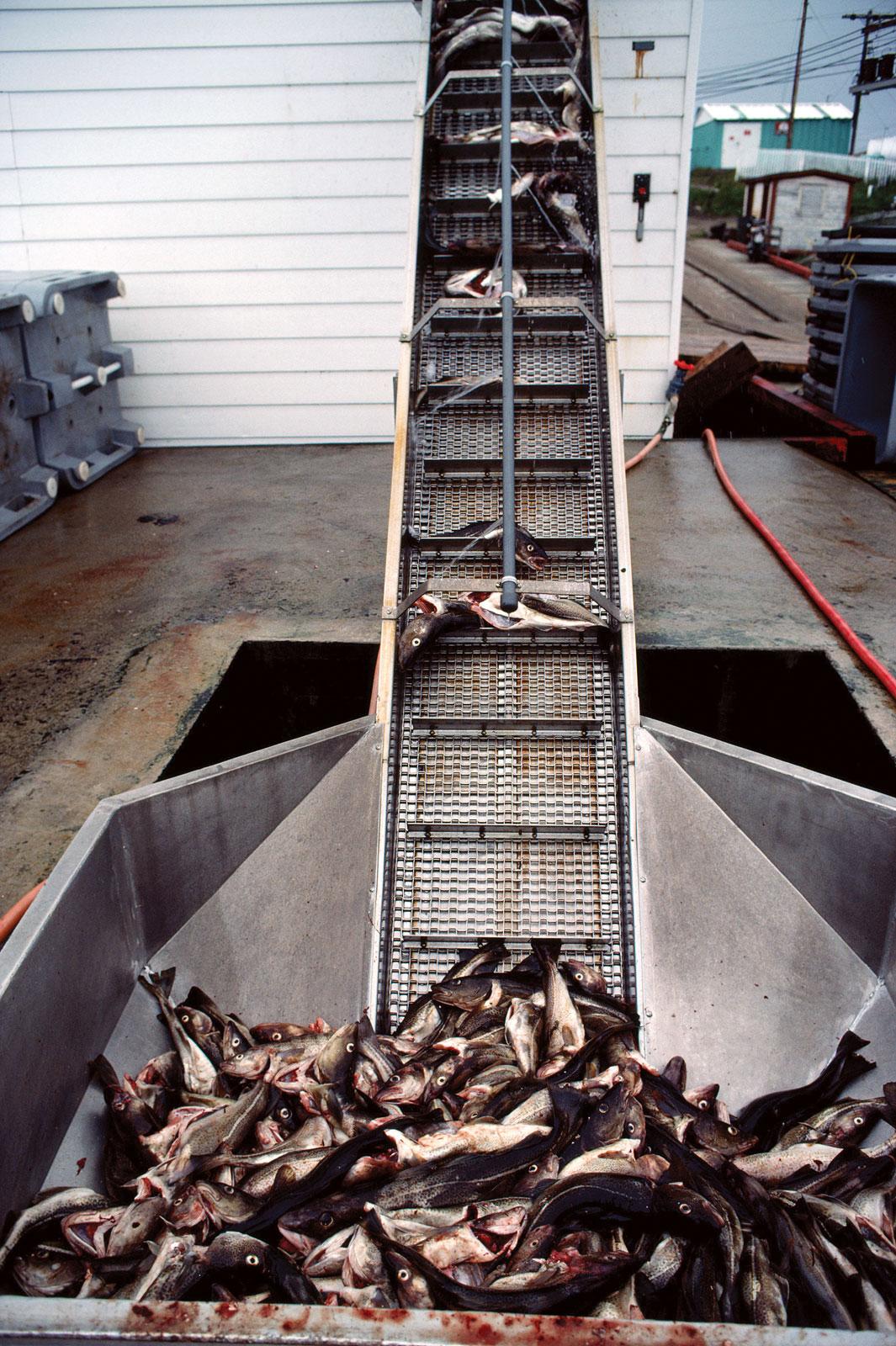 Fish Processing Centre