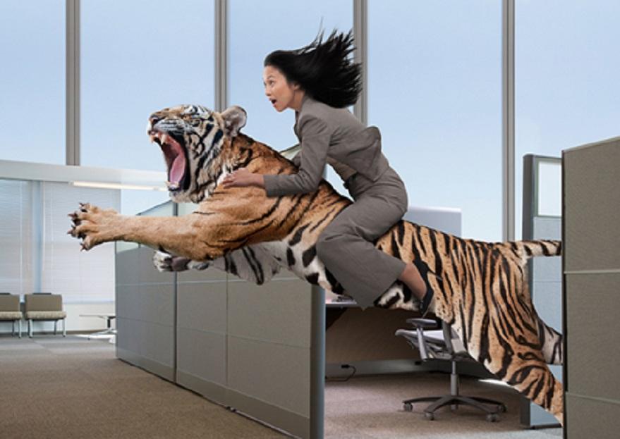 nation on tiger back