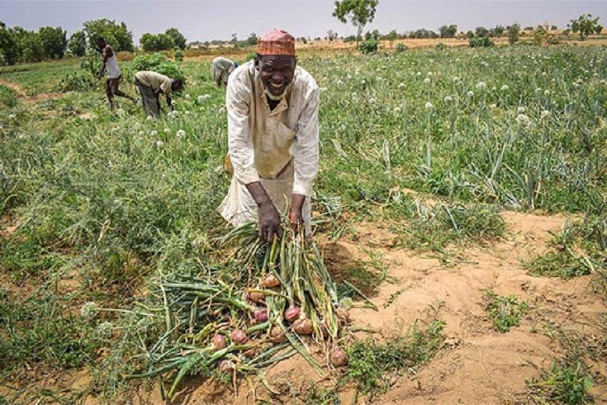 dry season farmers