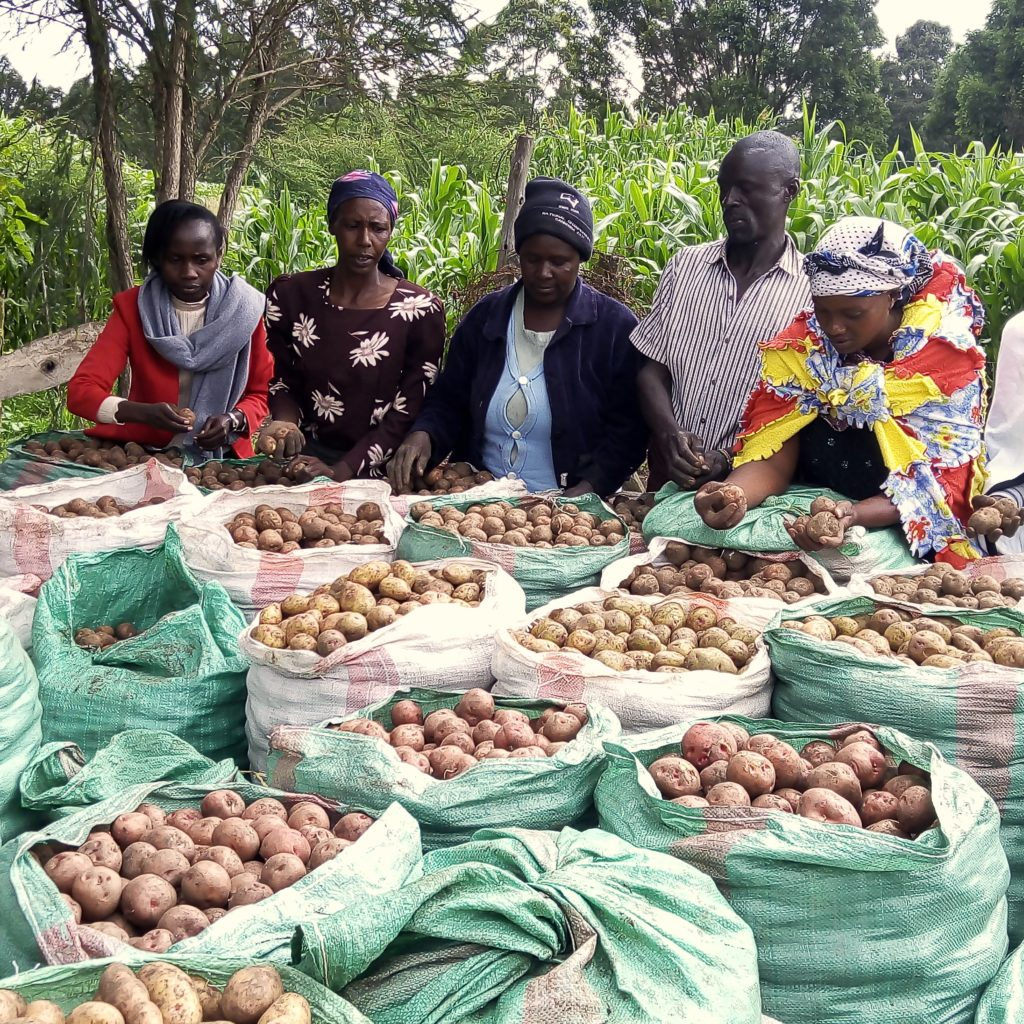 Potato Value Chain